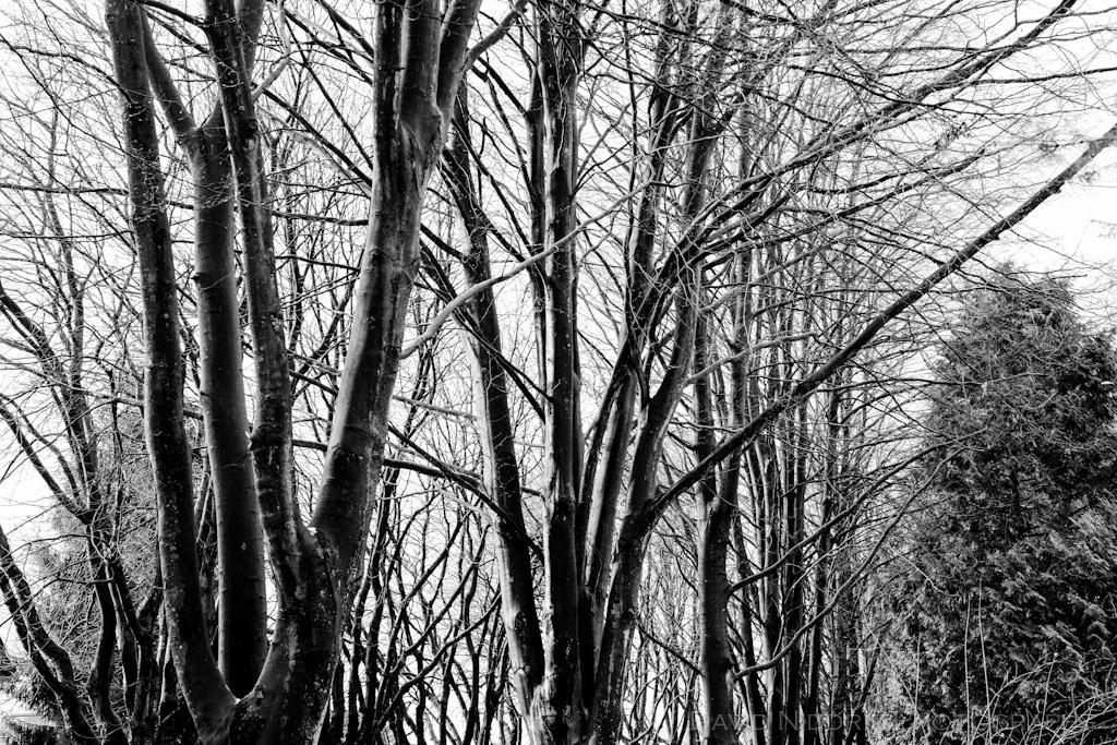 davidniddrie_woodland-3067-2
