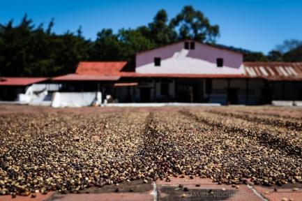 davidniddrie_guatemala_coffee-5651