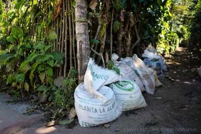 davidniddrie_guatemala_coffee-5962