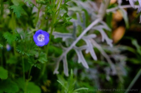 davidniddrie_woodlandgarden-june-6406