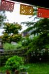 davidniddrie_woodlandgarden-june-6686