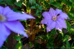 davidniddrie_woodlandgarden_-6195