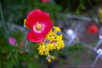 davidniddrie_woodlandgarden_july-7093