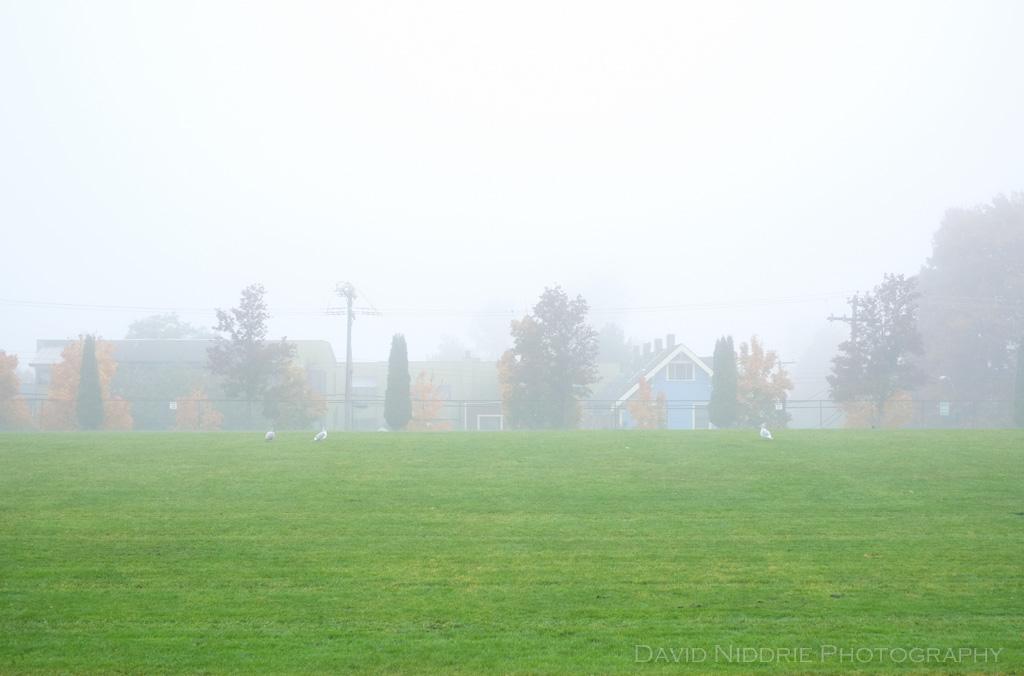davidniddrie_strathcona_fog-9841