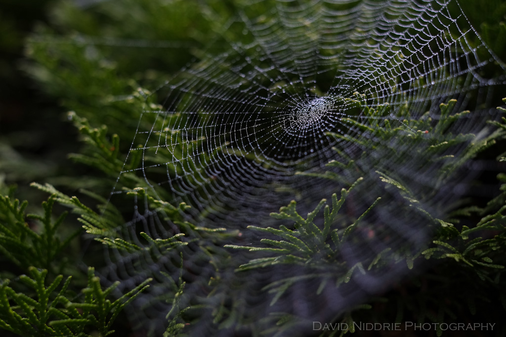 davidniddrie_woodland_spiderwebs-9823