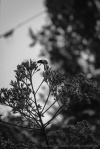 davidniddrie_woodlandgarden_aug-8175