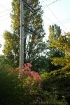 davidniddrie_woodlandgarden_aug-8319