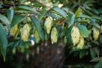 davidniddrie_woodlandgarden_aug-8389