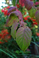 davidniddrie_woodlandgarden_autumn-9697