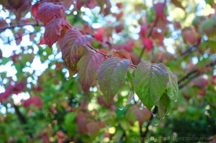 davidniddrie_woodlandgarden_autumn-9718