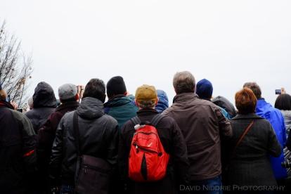 davidniddrie_vancouver_polarbearswim2014-1011