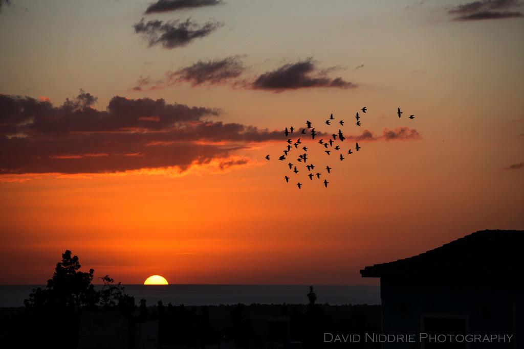 davidniddrie_trinidad_sunset-9814