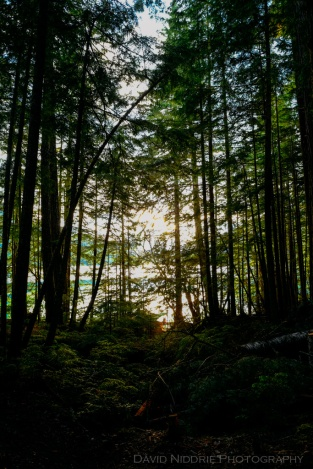 davidniddrie_BC_cheakamuslake-6363