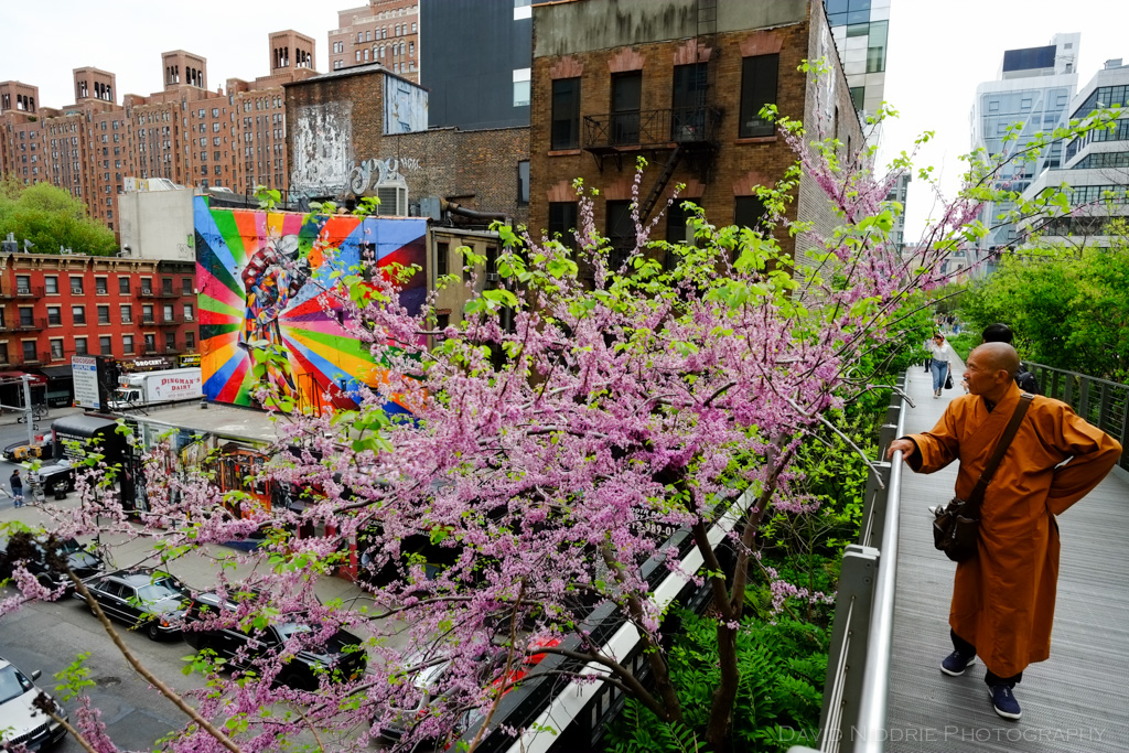 davidniddrie_nyc_highline2015-1399