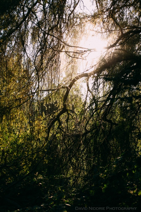 Vancouver Folk Music Festival - sunlight peeks through the willow trees