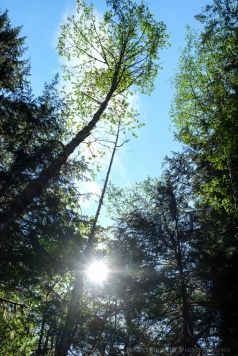 Trees and sunshine in the forest.