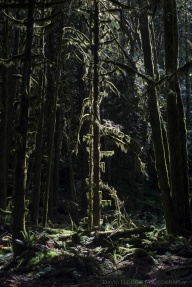 A moss-covered tree is silhouetted in the forest.