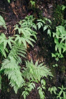 Detail photo of ferns and trees.