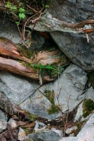 An abstract photo of rocks, plants and roots.