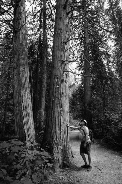 A man leans on an old growth tree in the forest.