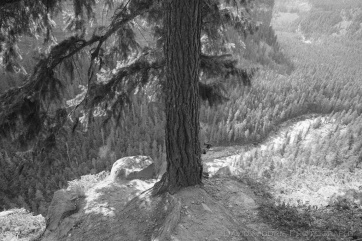 A tree is perched on the edge of a canyon in this black and white shot.