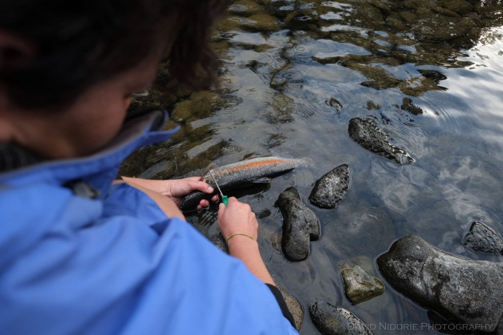 After successfully fishing, a woman cleans a rainbow trout in the river.