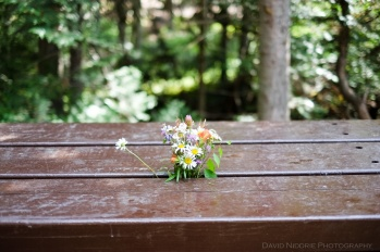 A bouquet of wild flowers at a campsite in Wells Gray Park.