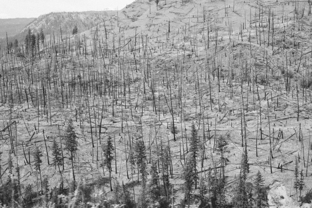 A wildfire scorched mountain in British Columbia, near Barriere.