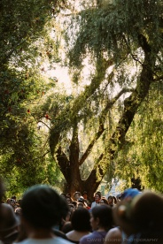 Sun through the trees at Stage 3.