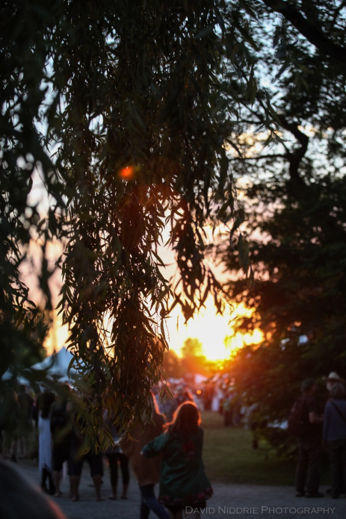 Golden Hour in the trees at the Vancouver Folk Music Fesival.