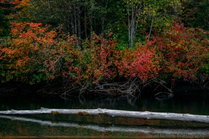 Red and yellow leaves lines the banks of the Skagit River in BC.