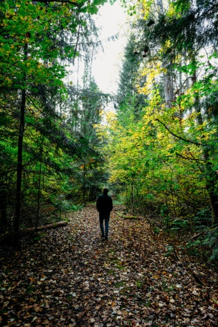 A man takes a walk down a leaf-strewn forest path.