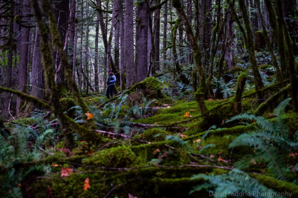 A woman hunts for mushrooms in the Skagit Valley rainforest.