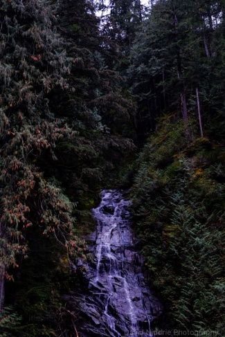 A waterfall plummets from the forest at sundown in the Skagit Valley.