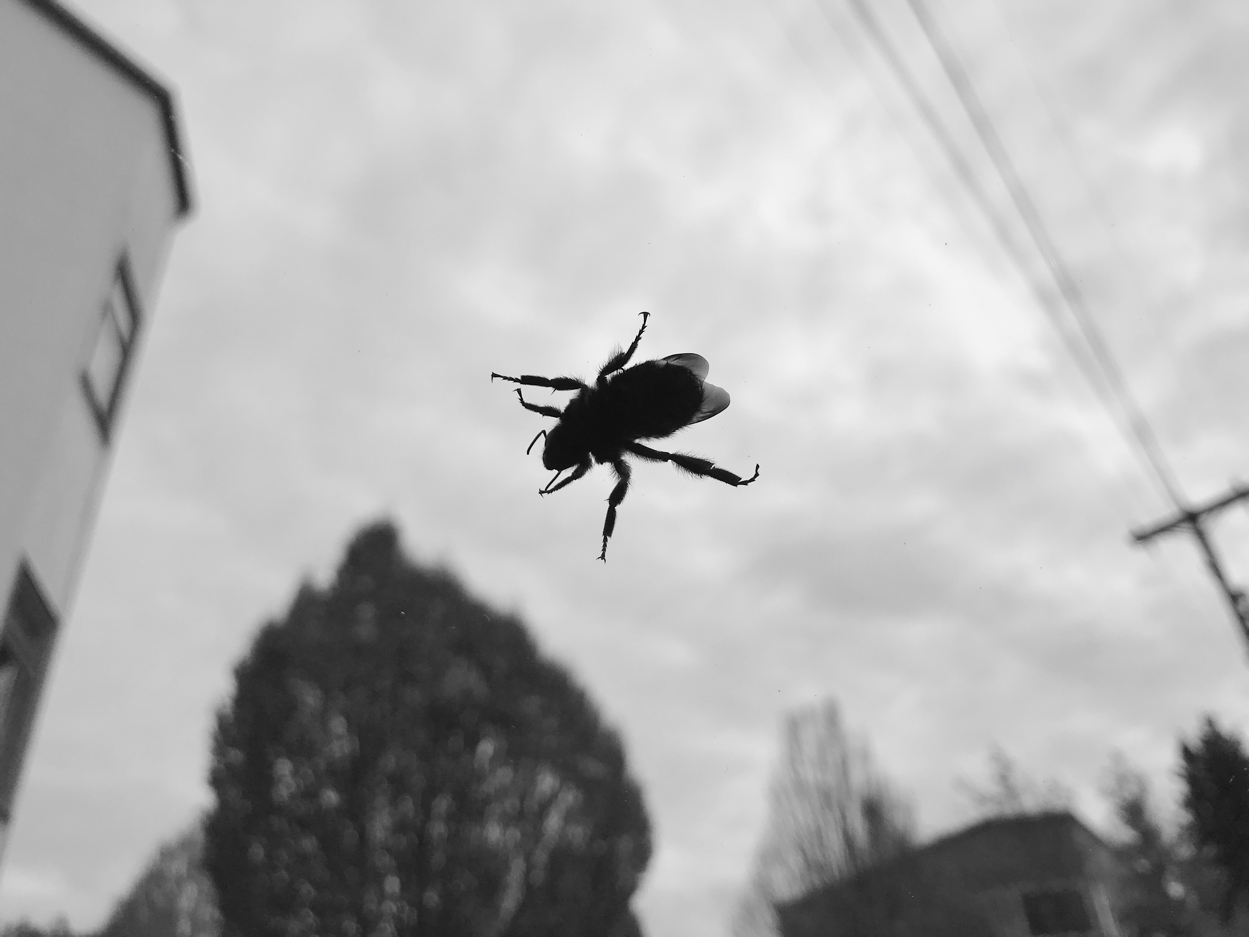 Killer* Bee